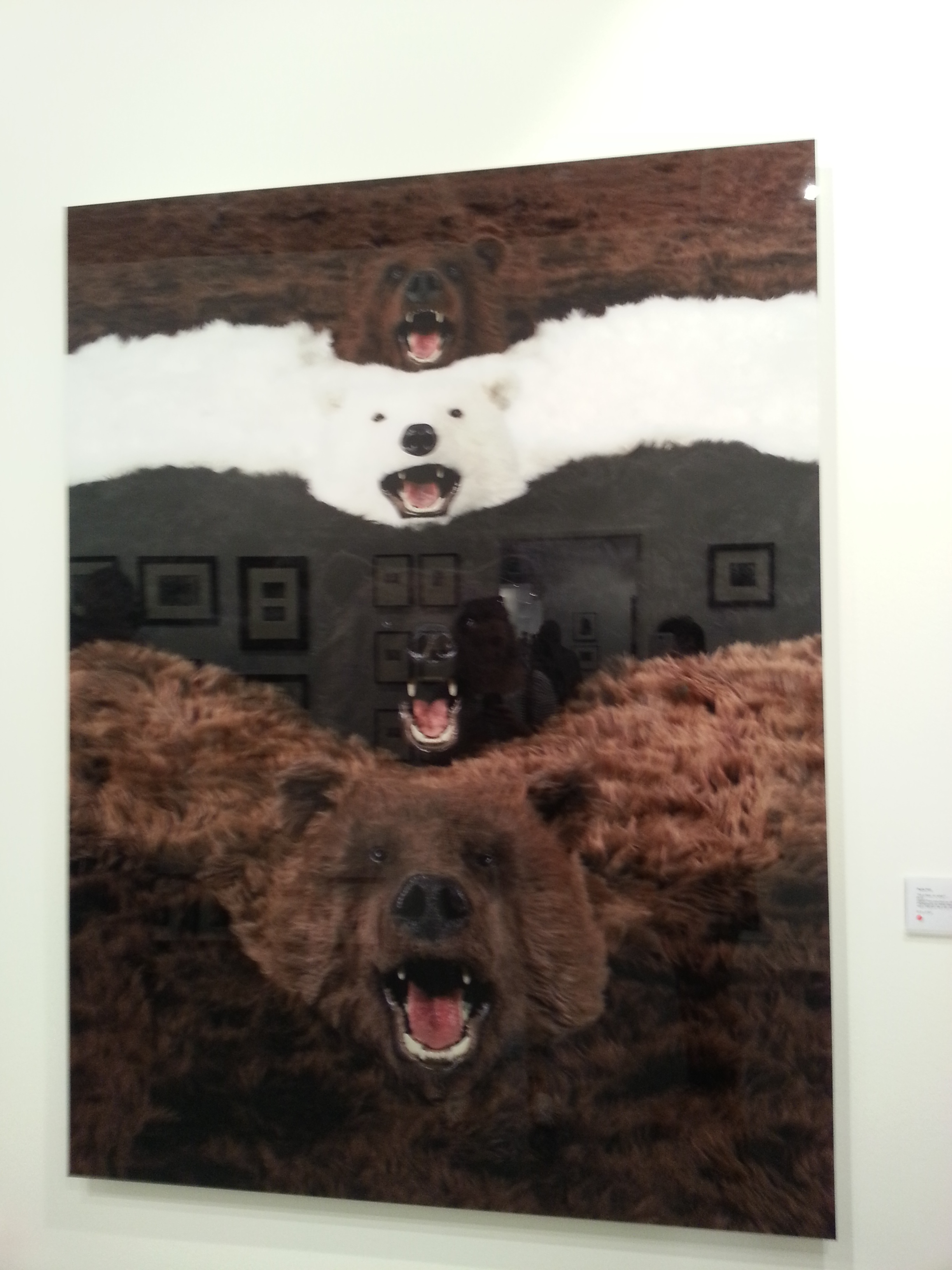 "Paola Pivi  - ""I'm a bear, so what?"" 2012"