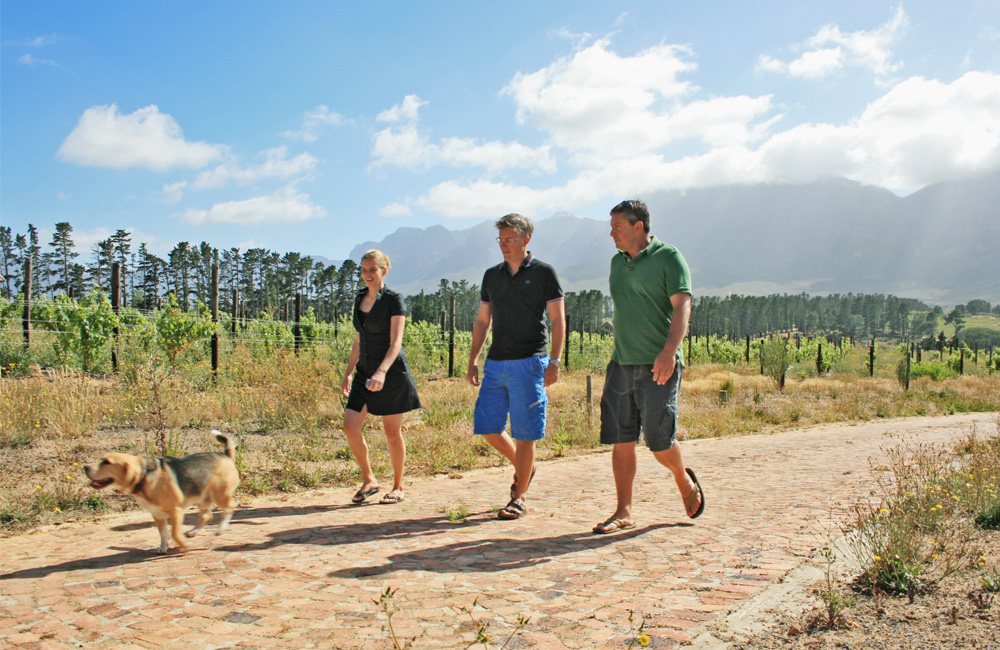 From left: Charlie, Marie-helene and Thierry Schaap with winemaker Riaan Oosthuizen, walking through the Sauvignon Blanc block.