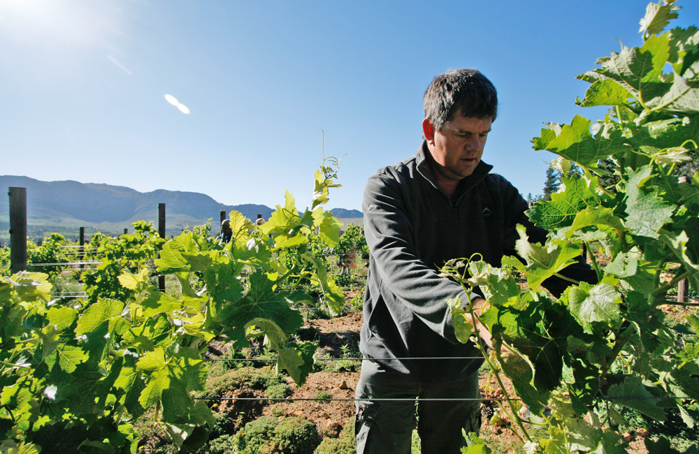 Jaco – our farm manager prepares for our first harvest, summer 2011.