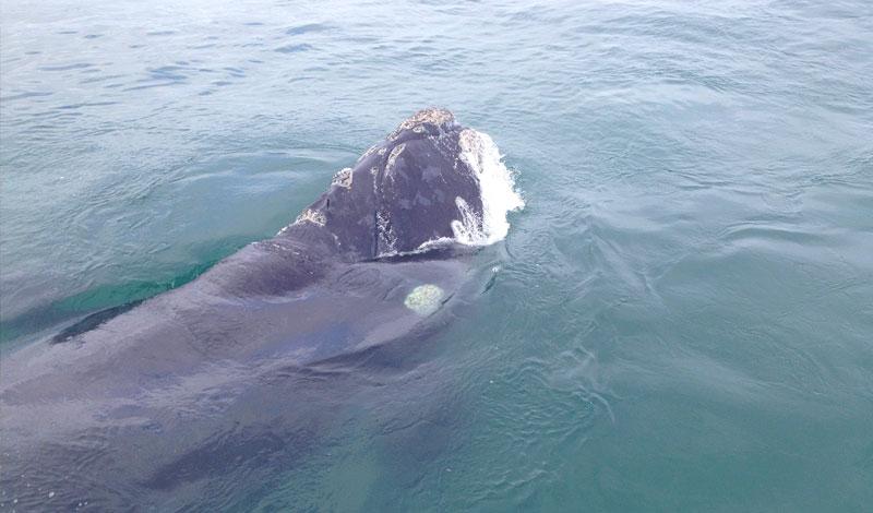 Lalapanzi-Lodge-Whale-Watching.jpg