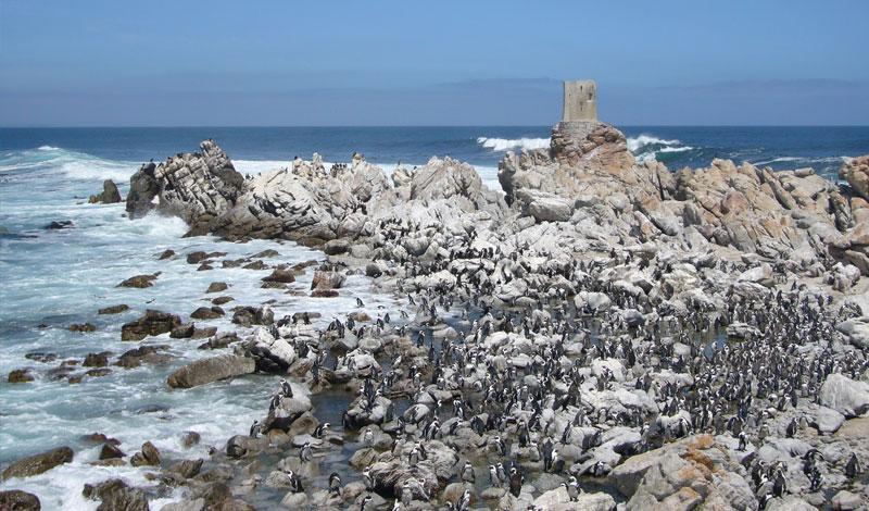 Lalapanzi-Lodge-Penguins.jpg
