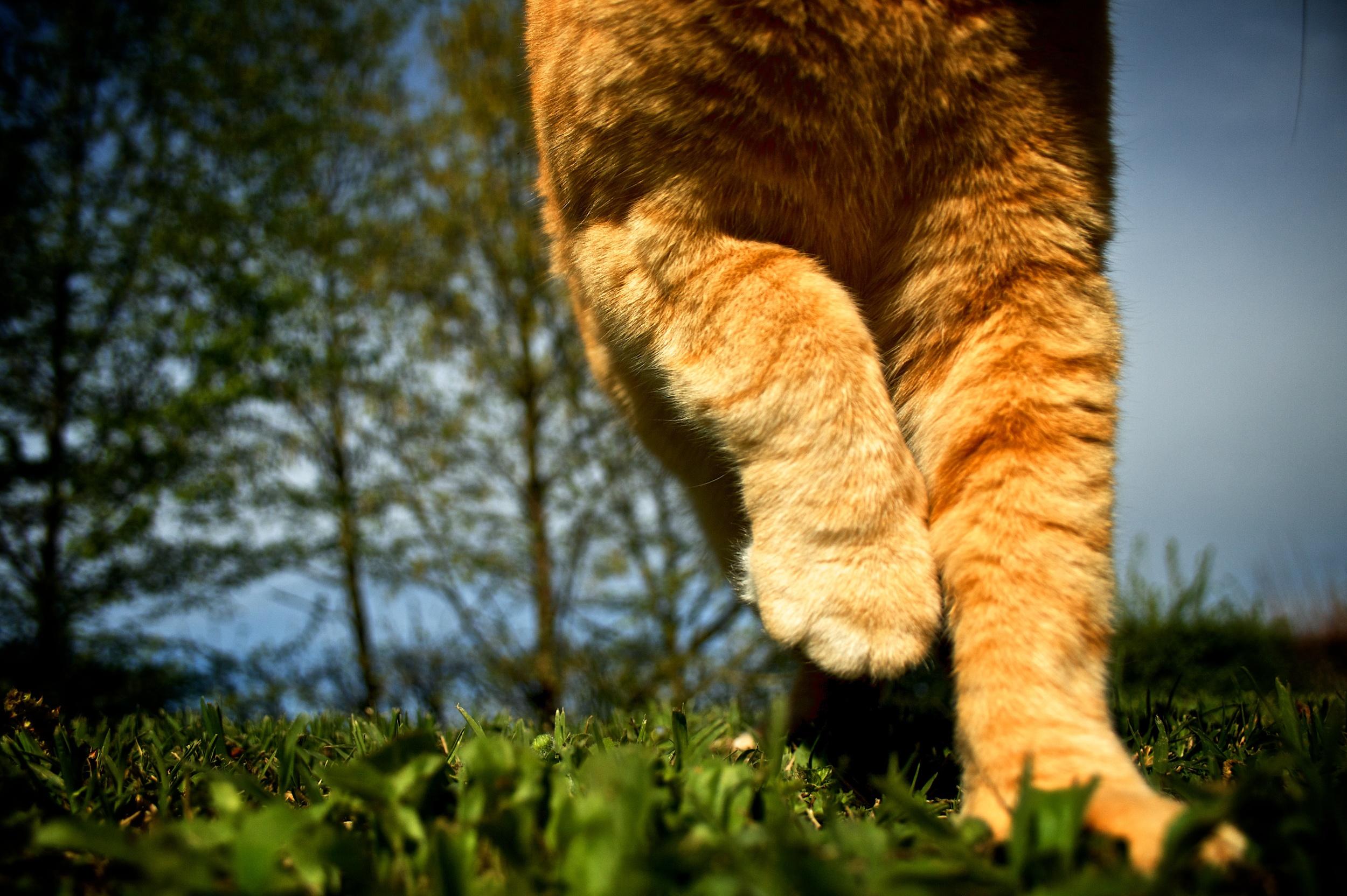 Feline walk.jpg