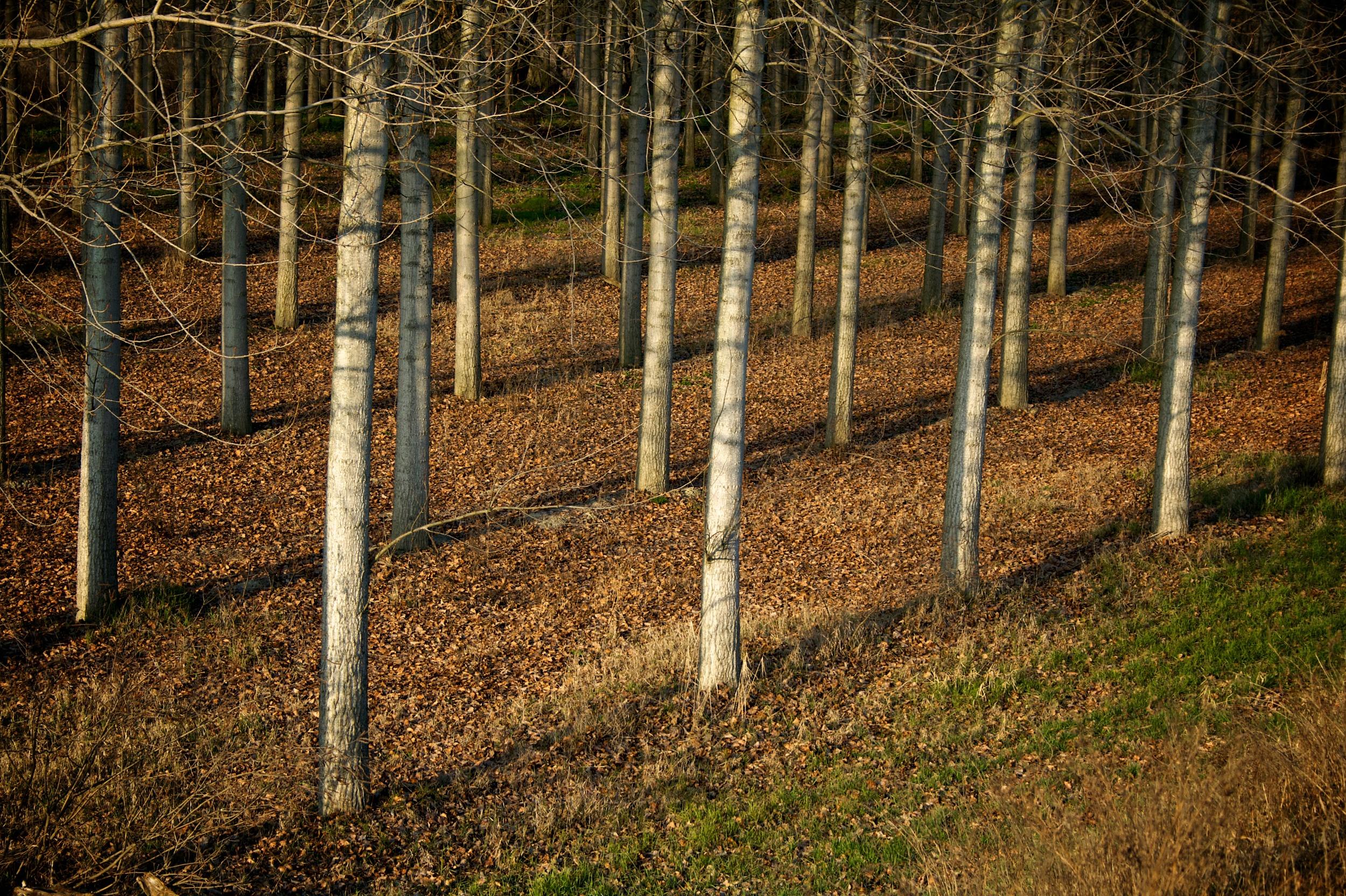 Vertical & diagonal Tree.jpg