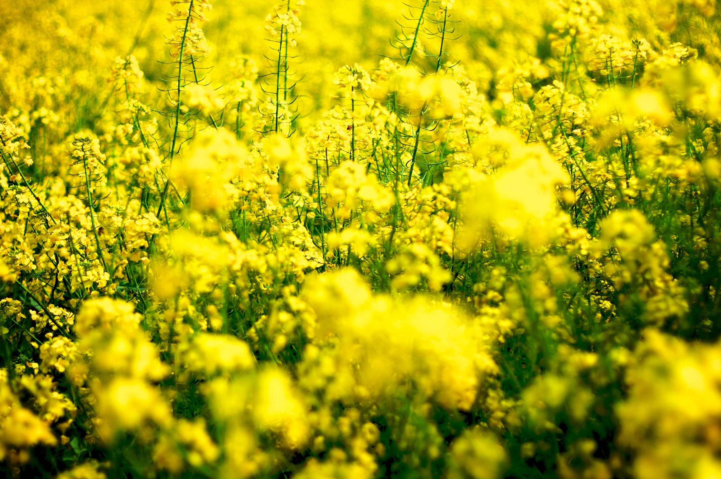 Golden flowers.jpg
