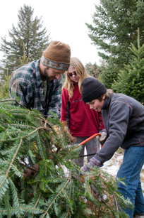 cut_your_christmas_tree.jpg