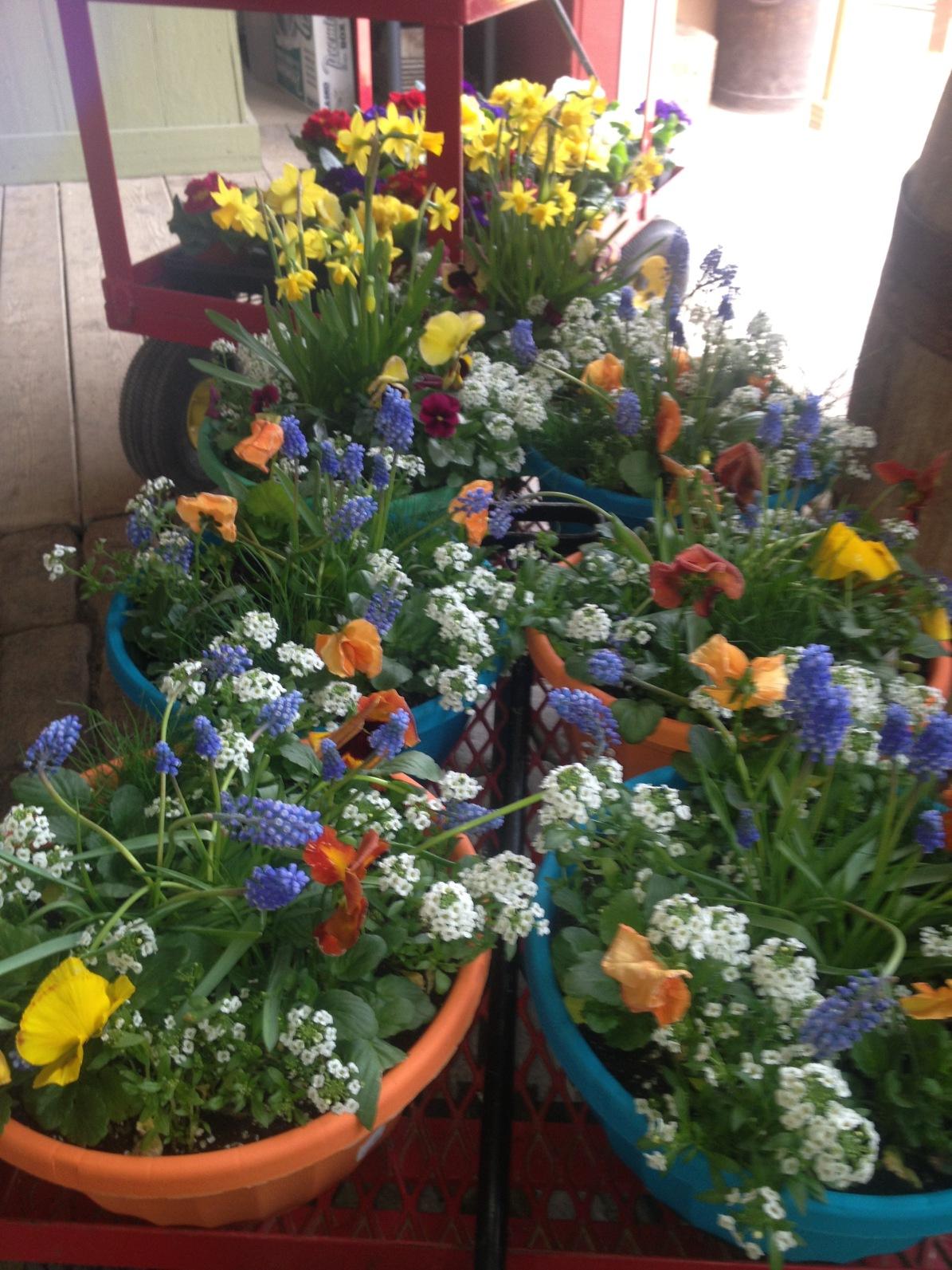 Farm Market Flowers 3.jpg