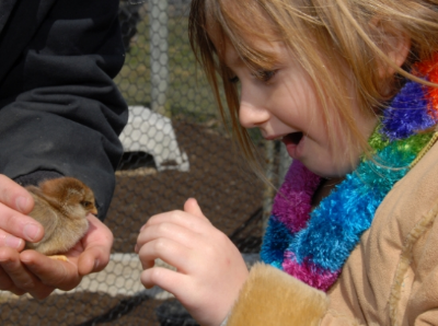 Child awed by Duckling.JPG