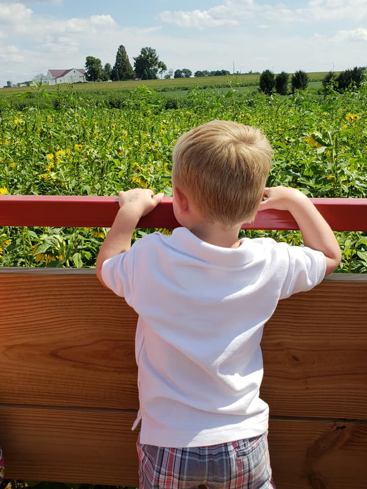 boy on wagon sunflower festival.jpg