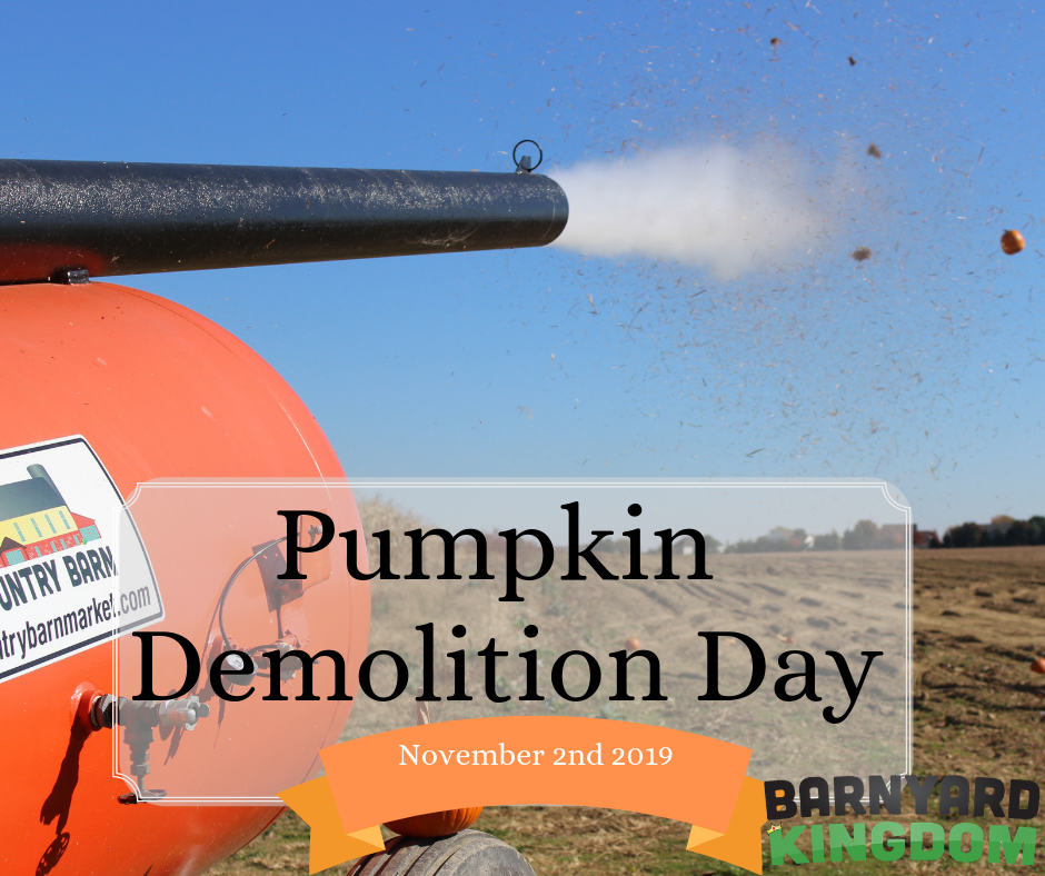 Pumpkin Demolition Day at Barnyard Kingdom