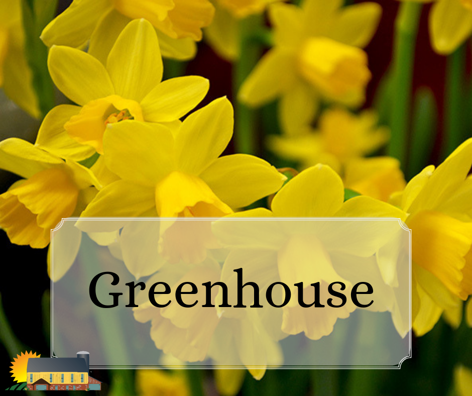 The Greenhouse at Country Barn will be blooming this Spring!