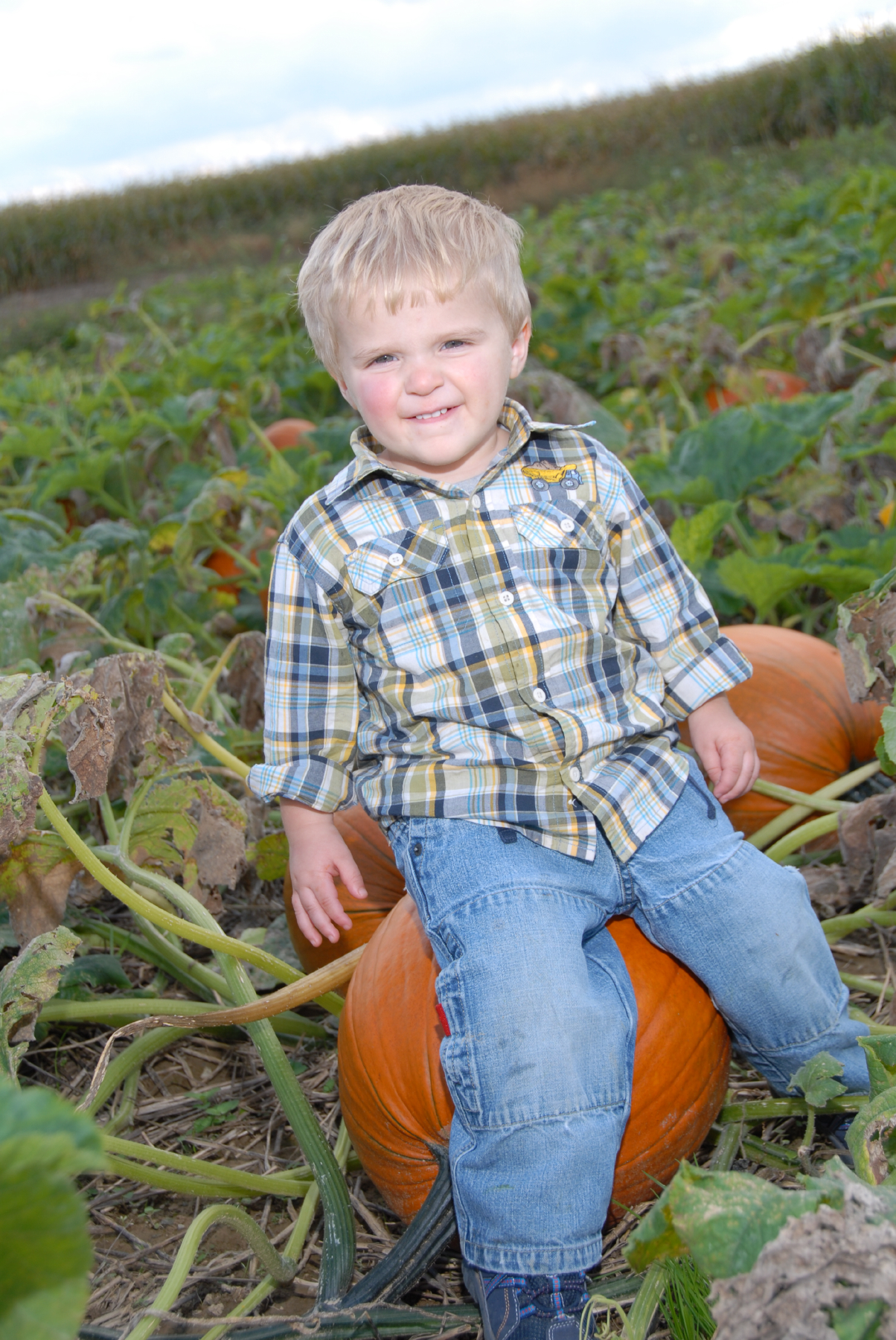 Claiming this pumpkin as his own.JPG