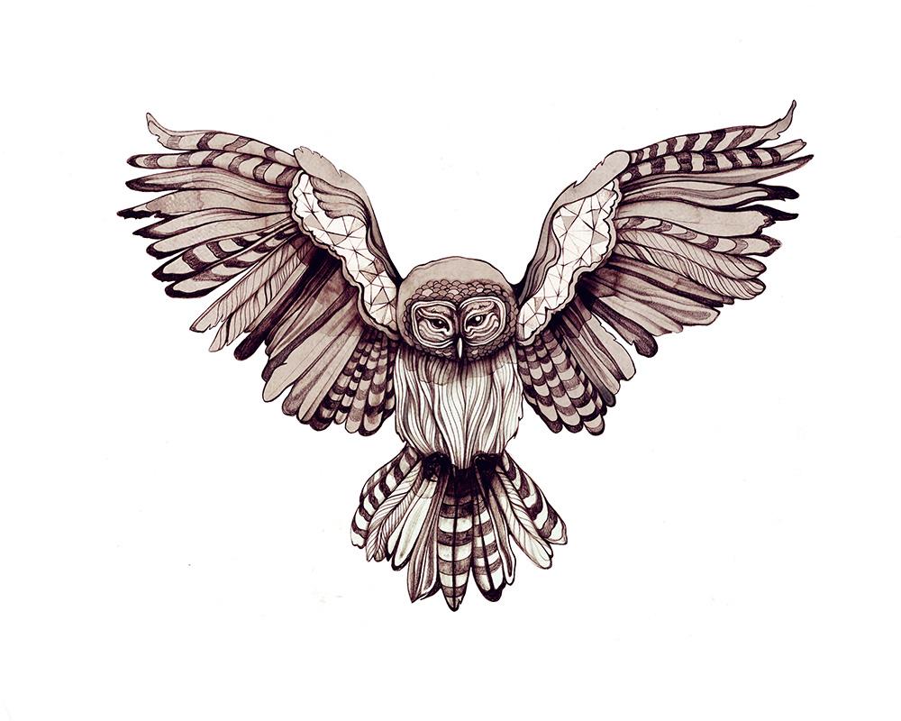 OwlieWingspan_onWHITE.jpg