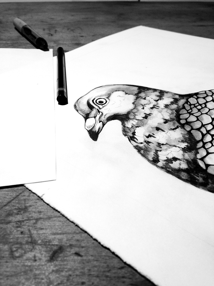 An earlier pigeon drawing that didn't make the cut. He ended up getting cut out and now sits on my drafting table to keep me company.