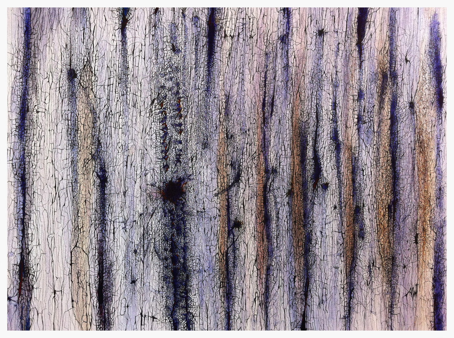 BARK CAMBIUM - CAMBIUM STUDY IN BLUE    Ink on paper    © ANTHONY WIGGLESWORTH 2014