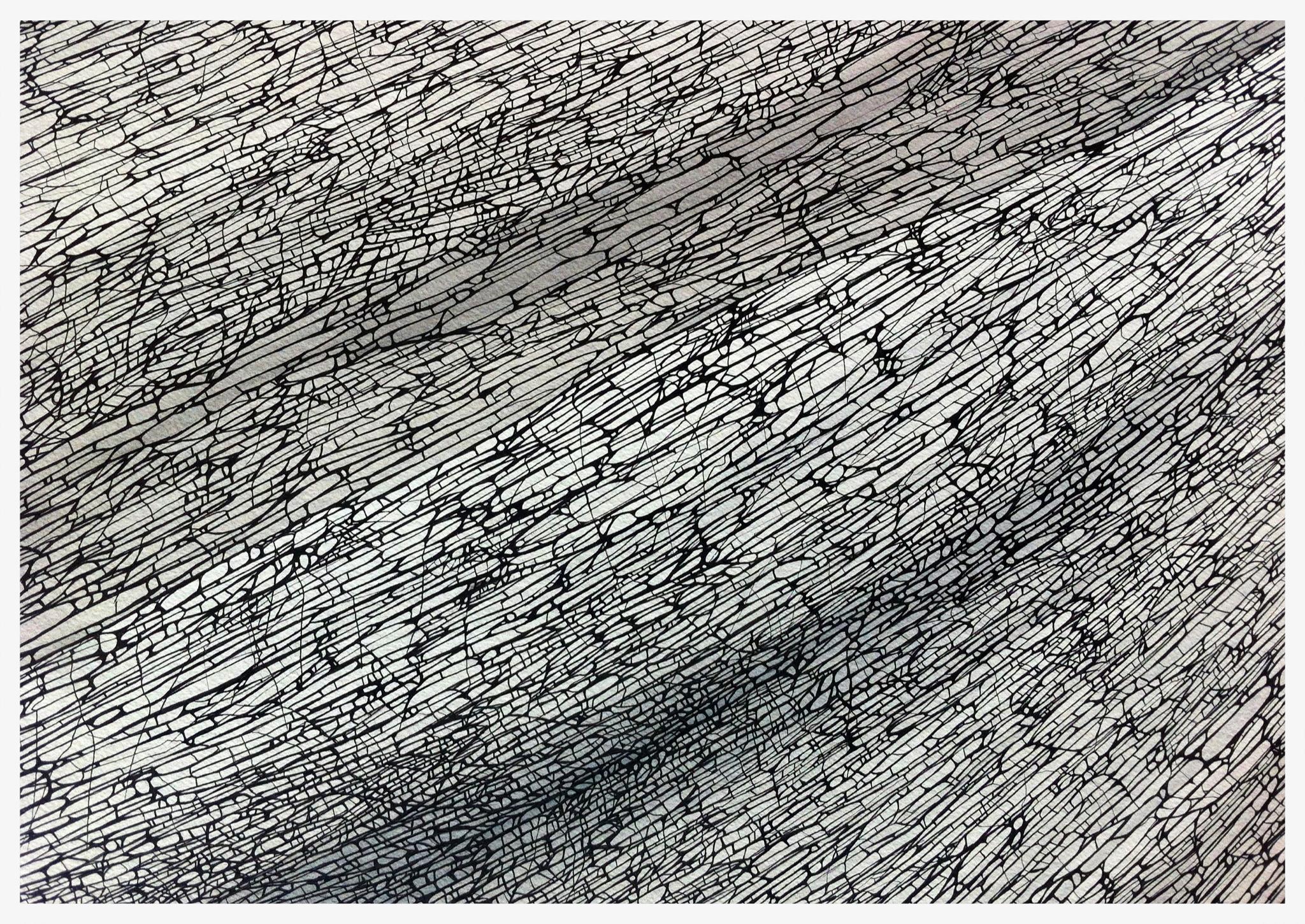 Divergence - Study 2 ©ANTHONY WIGGLESWORTH 2015  Ink on Paper -56 cm x 76 cm  anthonysart.com