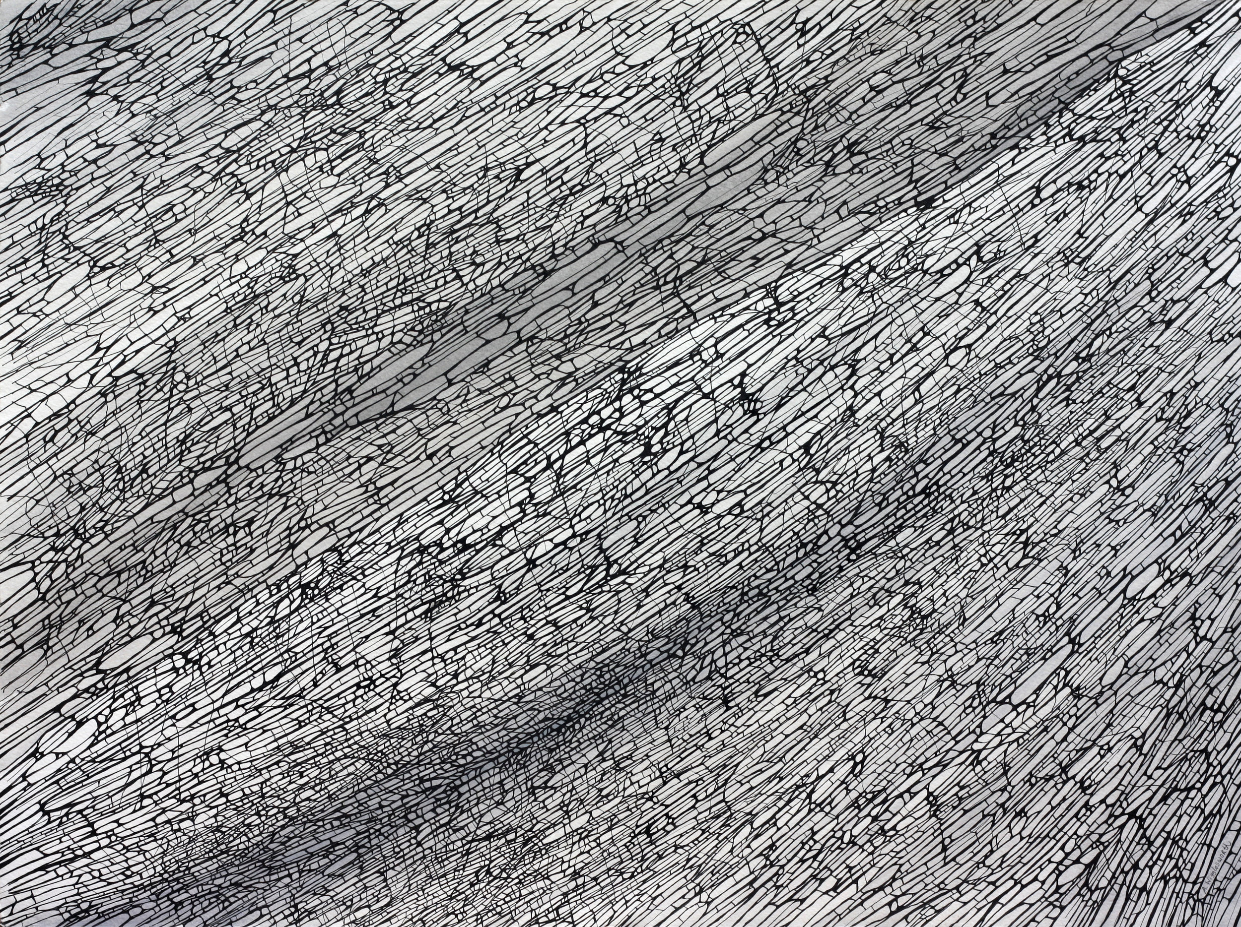 Divergence  Ink on paper 56 cm x 76 cm © Anthony Wigglesworth - All Rights Reserved