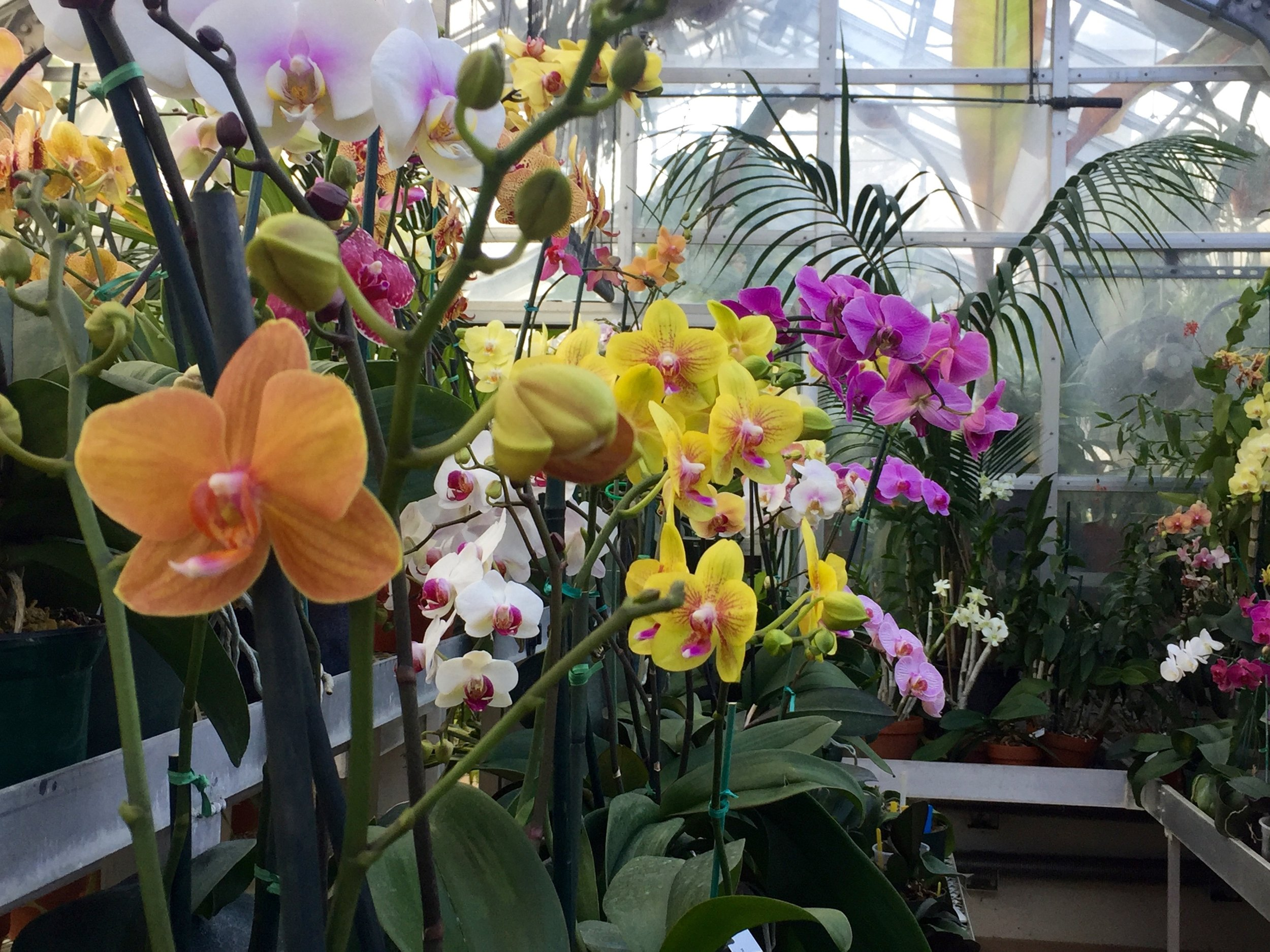 Orchids at the Hillwood Museum