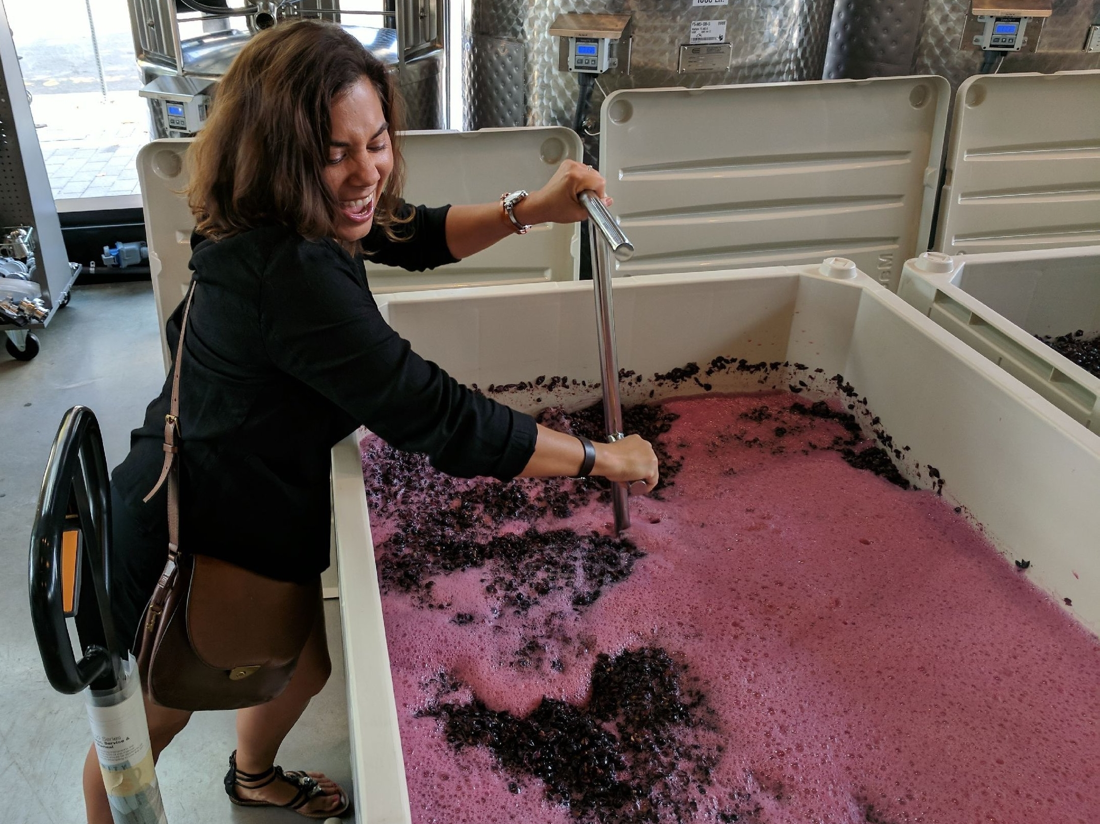 I'm helping. Punch down of Pinot Noir.