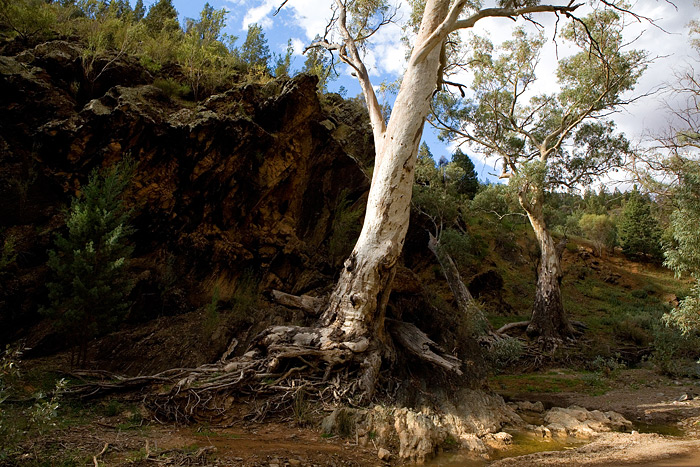 two-trees-2413.jpg