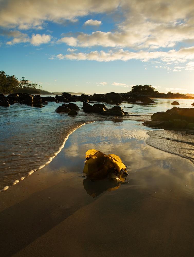 seaweed on beach 9125.jpg