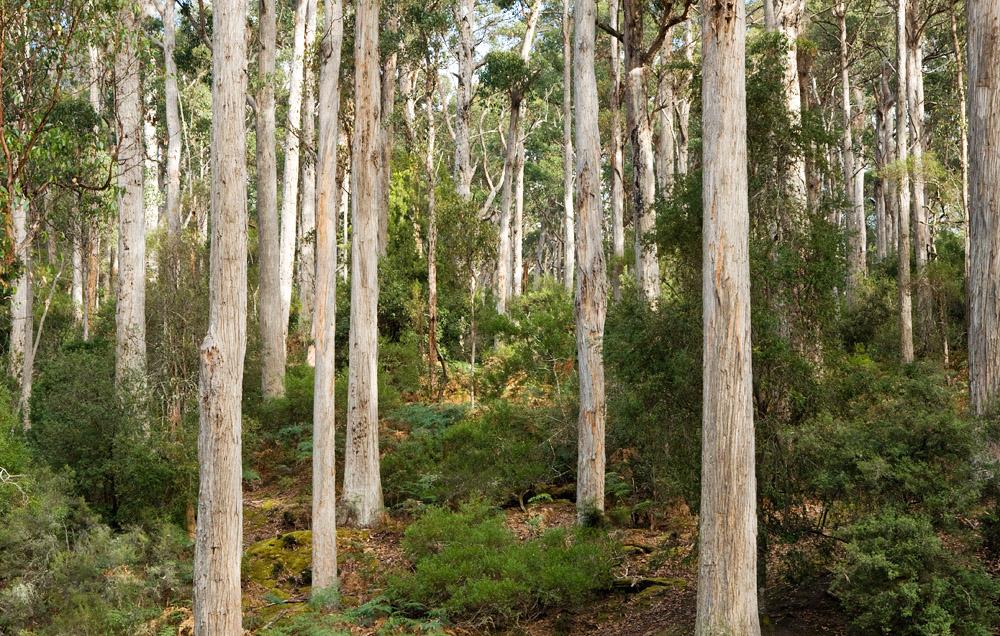 mt field forest 9608.jpg