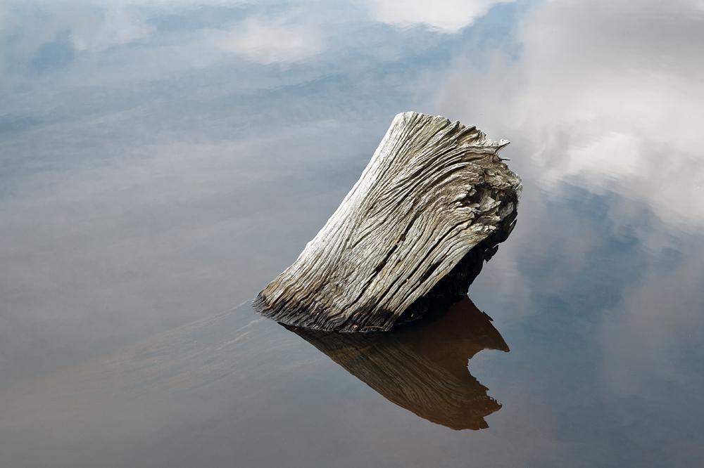 submerged log 9198.jpg