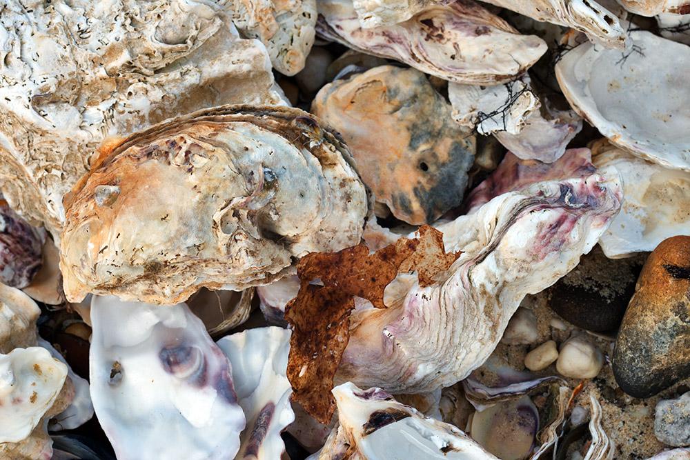 Huge variety of shells washed up at Randalls Bay