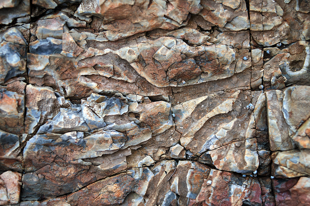 Fossil Cove was one of the first places I visited on the east coast near Kettering. Incredibly detailed and coloured formations by the water.