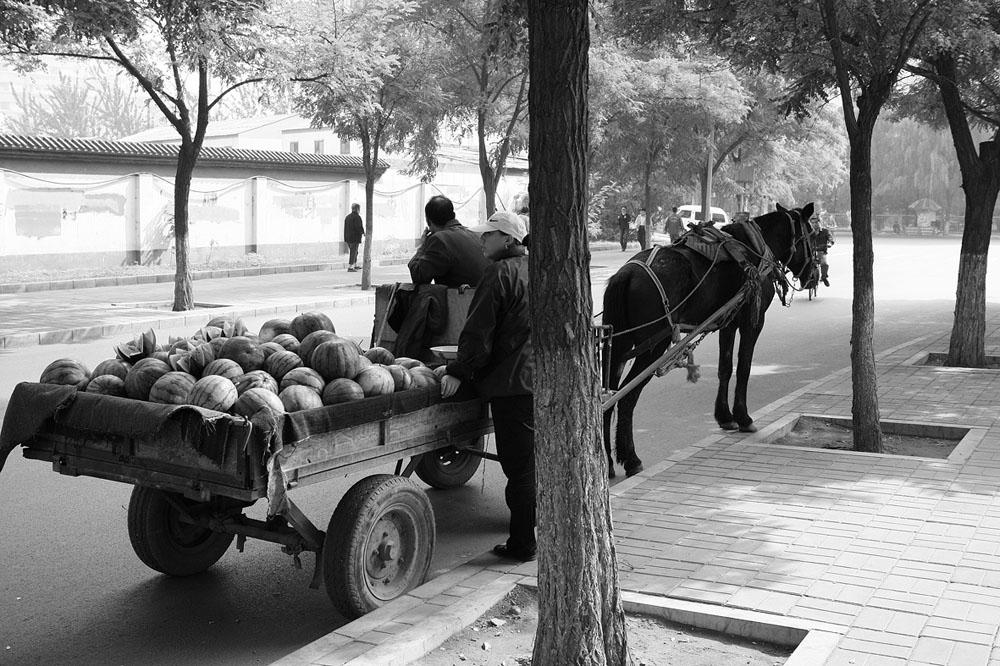watermelon cart 3018.jpg