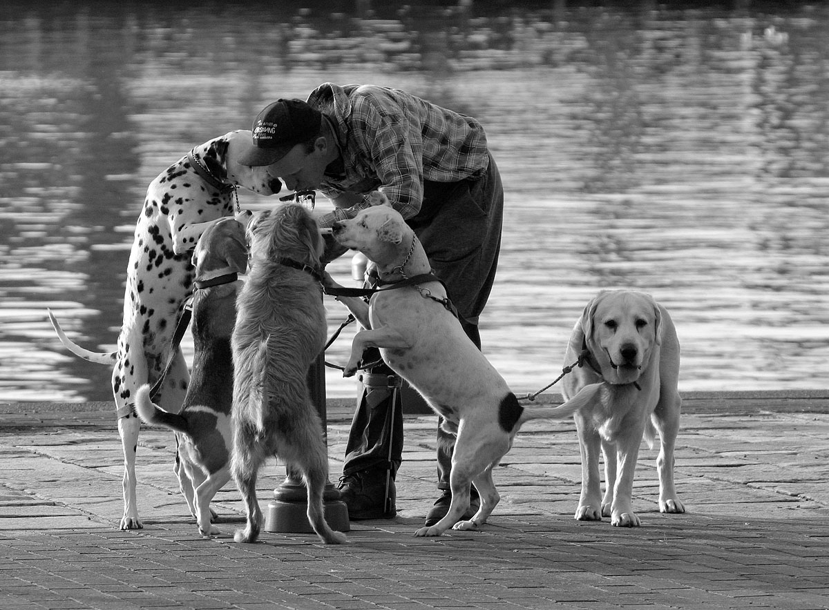 dogwalker and bubbler.jpg