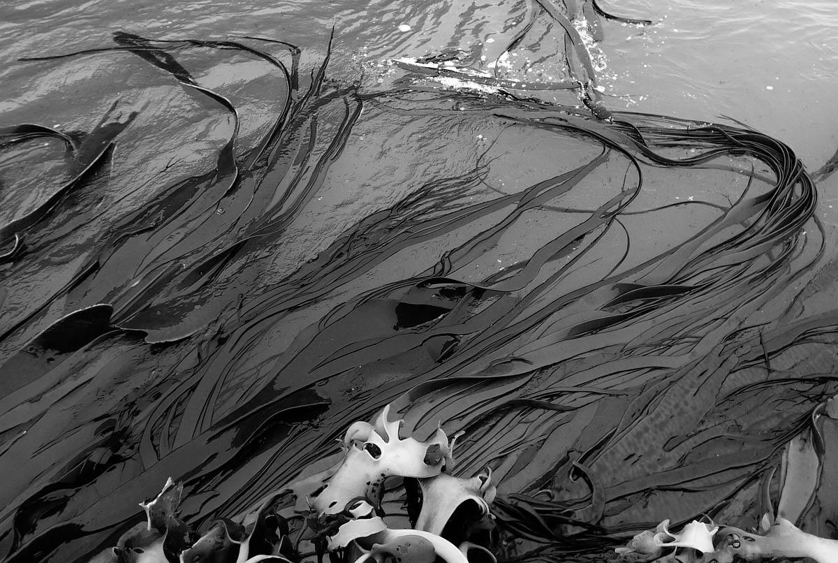 seaweed bw 0592.jpg