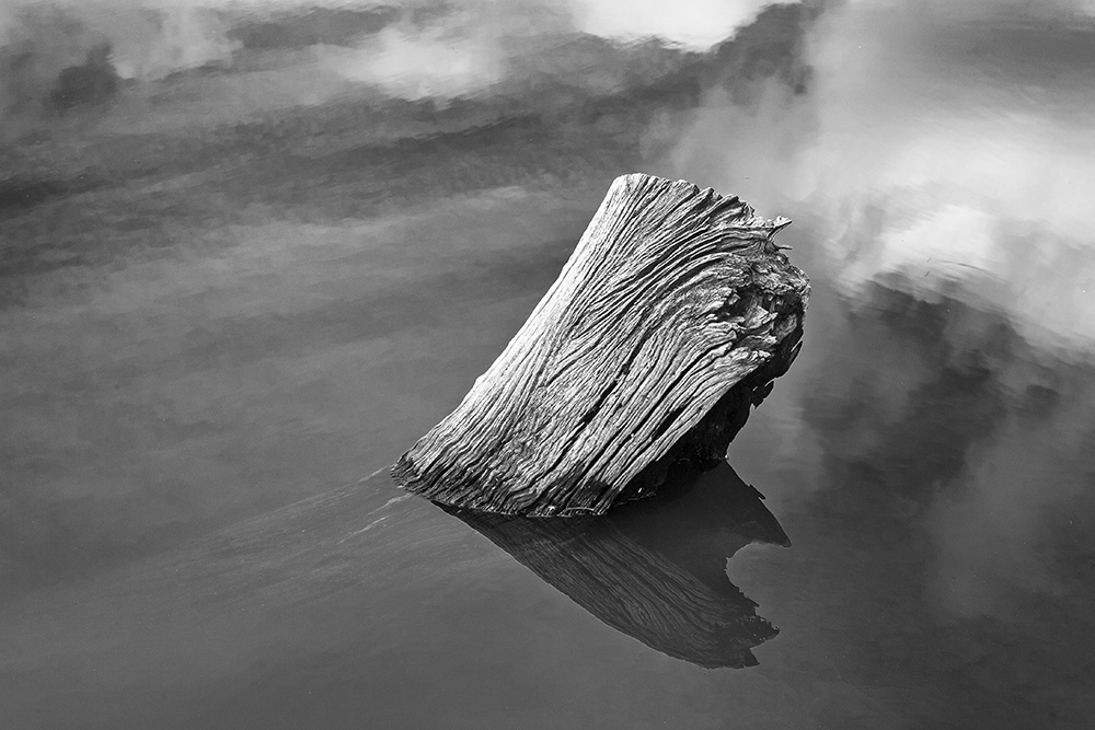 submerged log bw 9198.jpg