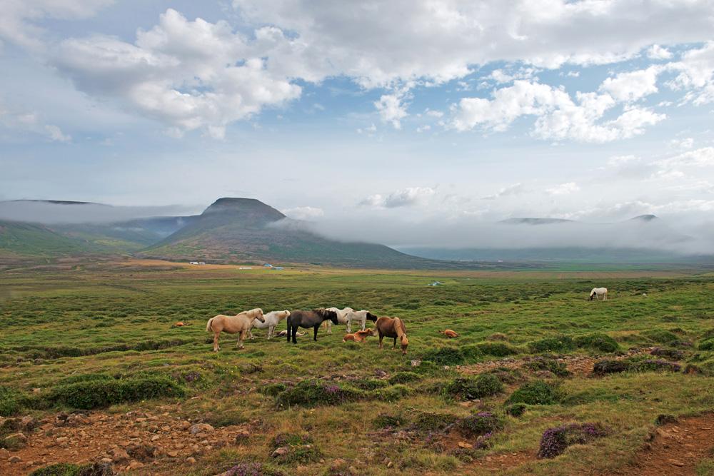 horses near mountain sm 3054.jpg