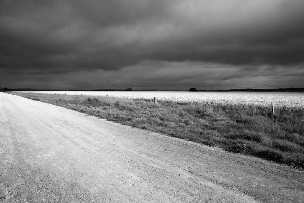 grey road field wedge 3545.jpg