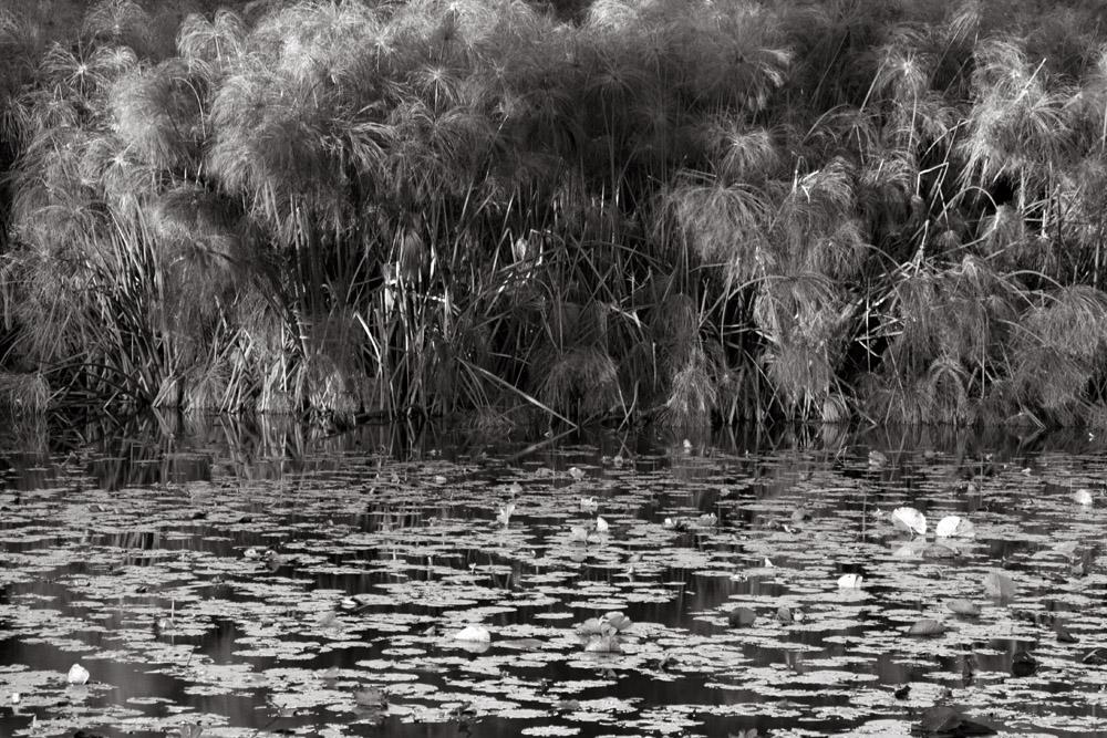 reeds 0826.jpg