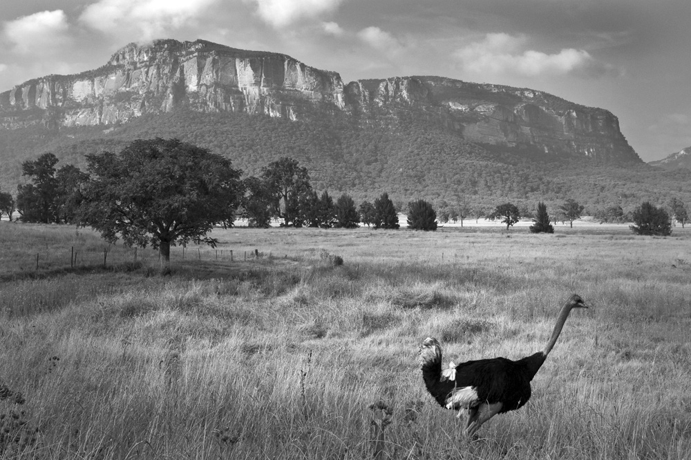emu and hill 0013.jpg