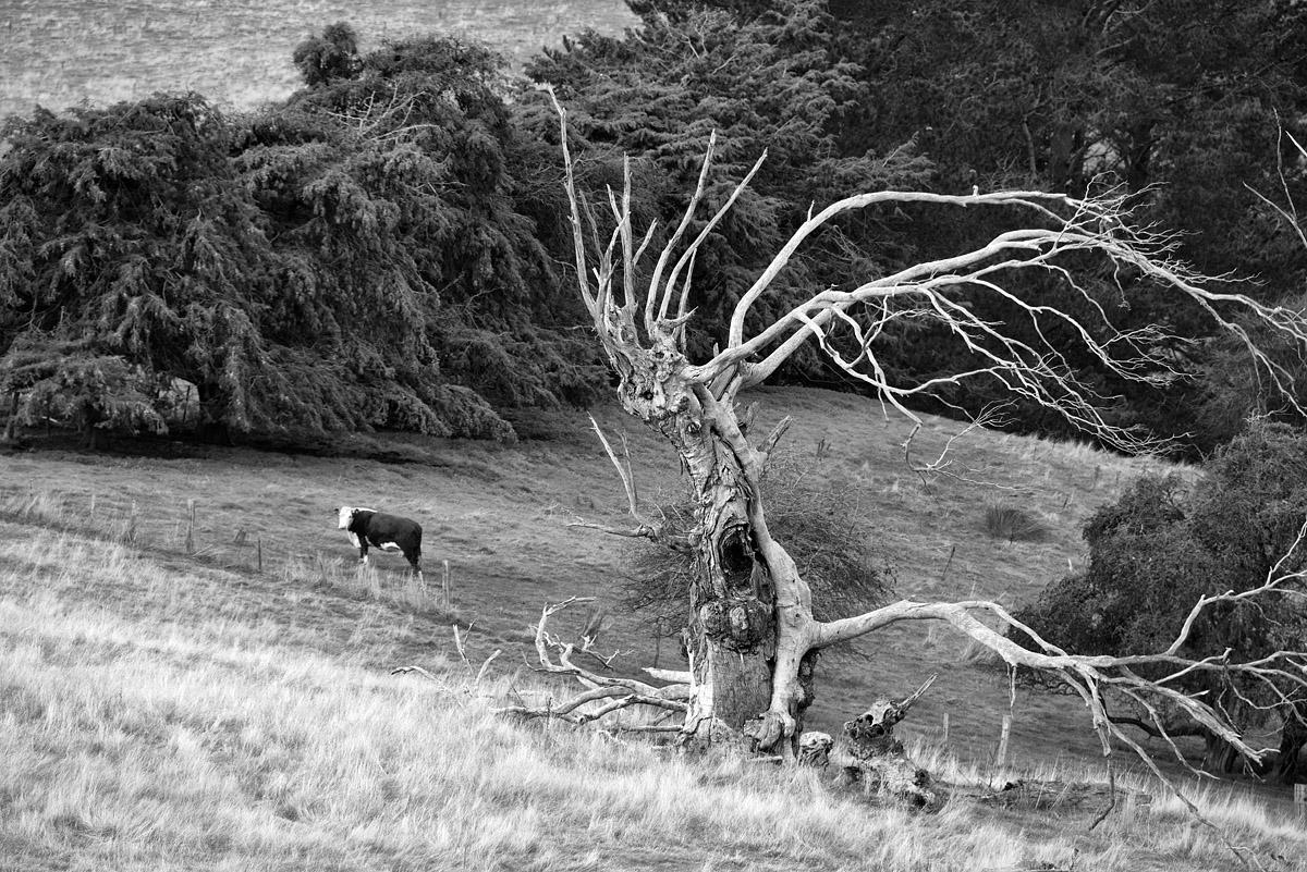 mad tree disease 0281.jpg