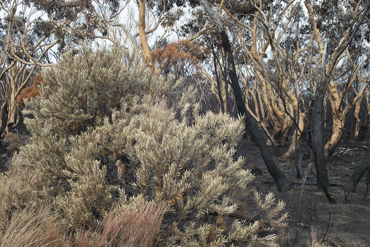 survivor bushland 6602.jpg