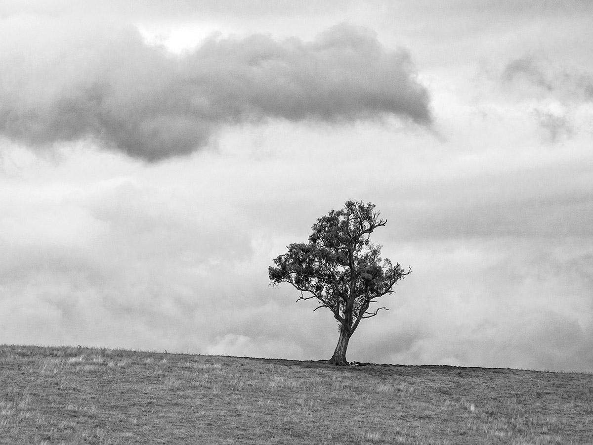 single tree on hill bw 90185.jpg
