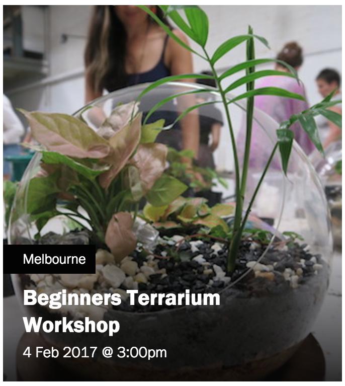 4 feb terrarium.png