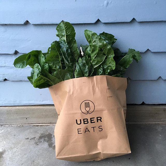 Making a delivery of silverbeet today. This is what should be Uber eat bags. . . . #ubereats #silverbeet #greens #eatyourgreens #growyourownfood #organicgardening