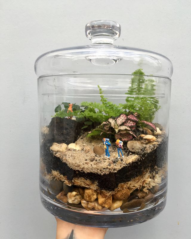 It's been a long time, long time, since I've made new terrariums. But these will be in store this weekend. . . . #terrarium #miniatures #petitegreen #handmade #northcote #melbourne