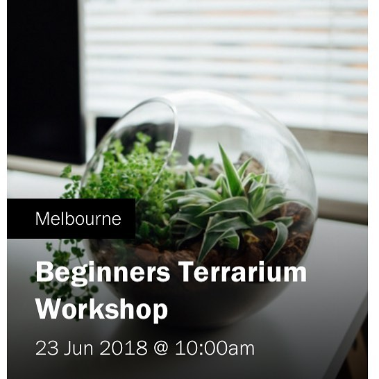 Next terrarium workshop 🌱🌿 23 June  Book on line www.work-shop.com.au . . . #workshop #terrarium #terrariumworkshop #plants #plantsmakepeoplehappy #petitegreen #melbourne #fitzroy @workshopmelbourne