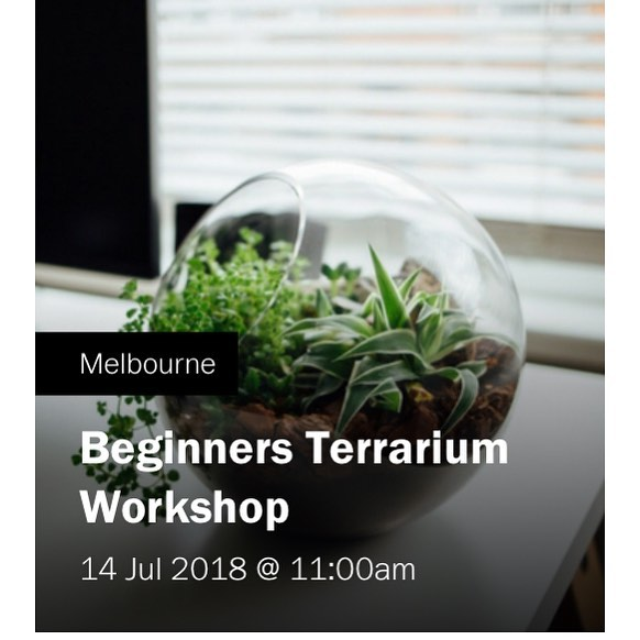 Next workshop is this weekend 🌿🌱 time to get your hands dirty 👍 . . . #terrarium #terrariumworkshop #melbourne #petitegreen