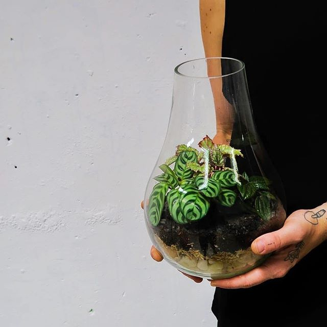 We're prepping the warehouse for another jam packed terrarium workshop with our pals at @petitegreen this morning🌱 Missed out? Never fear. Tickets for our next workshop are live baby!  Beginners Terrarium Workshop  Sunday August 19th  10am  Tickets at www.work-shop.com.au