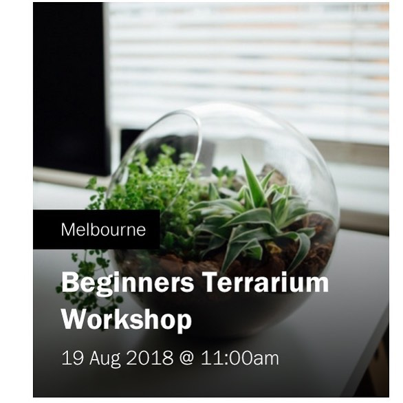 Next terrarium workshop 🌱 @workshopmelbourne . . 19th August book now to avoid disappointment . . #terrarium #indoorplants #girlswithplants #handmade #melbourne #petitegreen #fitzroy