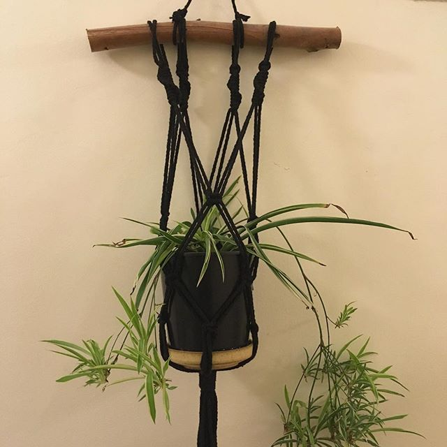 Petite Green macrame plant hangers are available from @themakeitcollective . . . #macrame #planthanger #hangingplants #indoorplants #urbanjungle