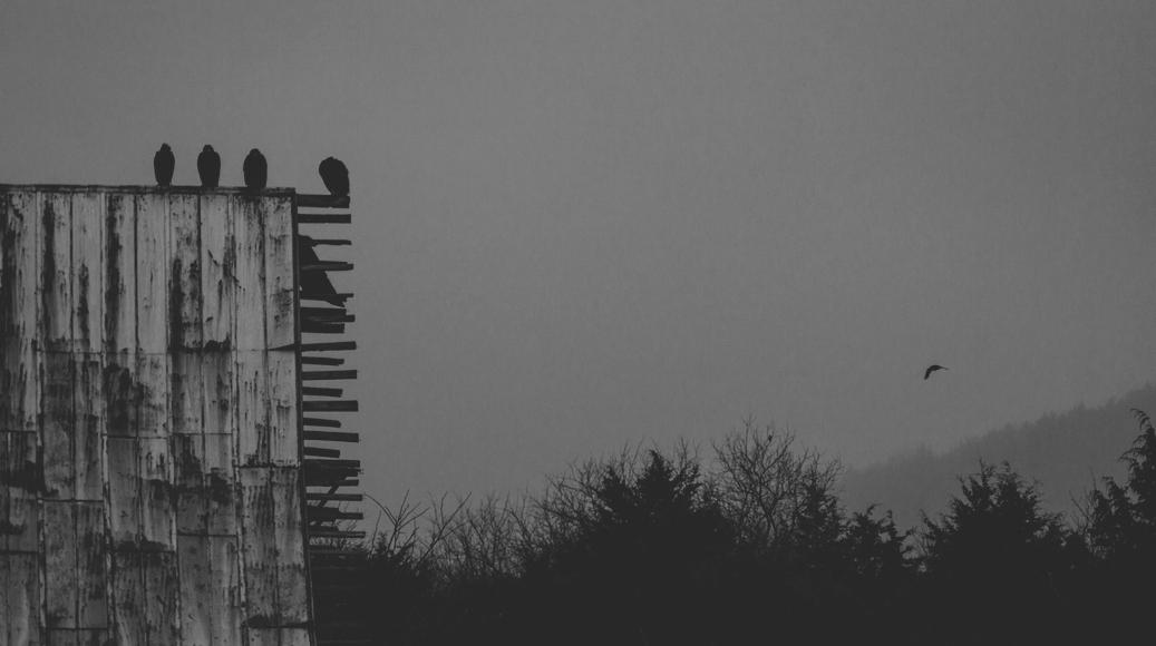 erick blackwood birds and barn.jpg