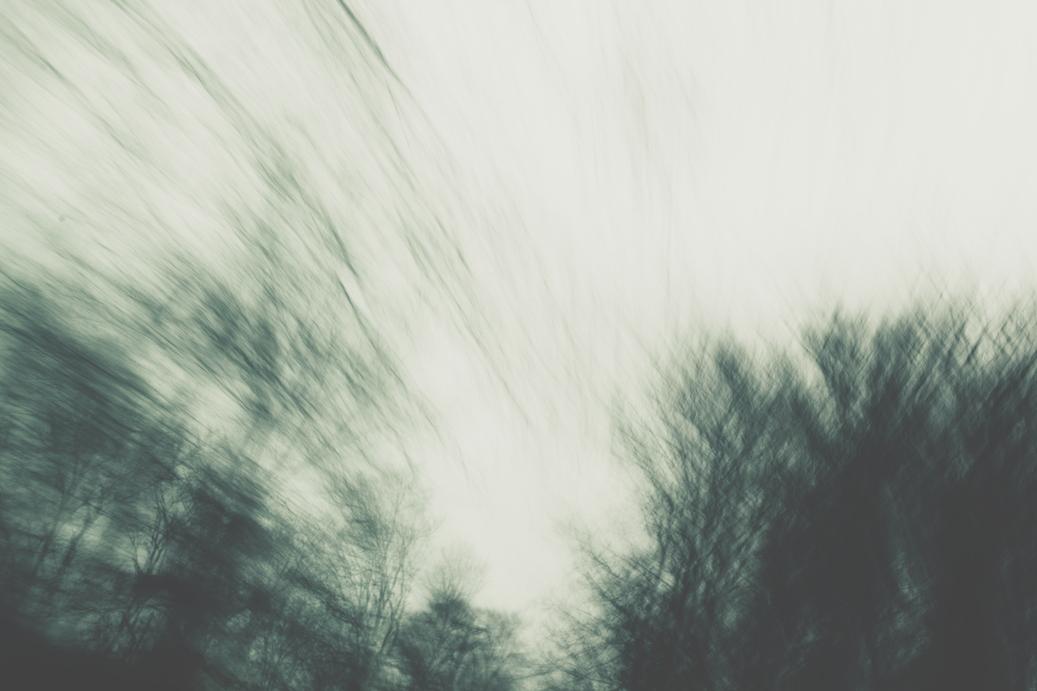 erick blackwood tree blur.jpg