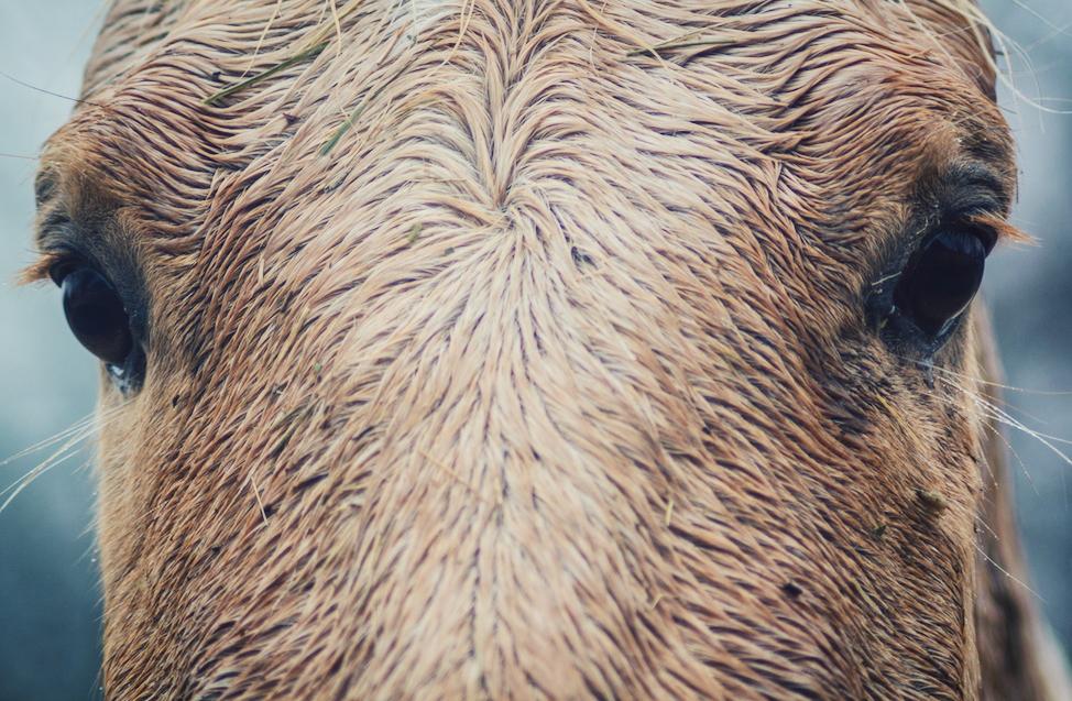 erick blackwood horse head.jpg